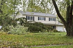 storm clean-up services